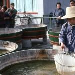 Fish farming.