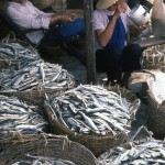 In South China, fish for sale.