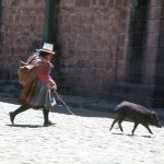 Taking a pig for a walk in Cuzco, Peru.