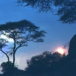 A beautiful sunset lights up the acacia trees.