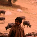 A Kashmir shepherd.